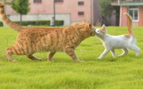 Picture cat, cat, kitty, familiarity
