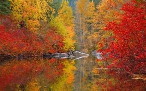 Picture autumn, forest, paint