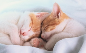 Picture mustache, sleep, paws, nose, kittens, blanket, ears, sleep