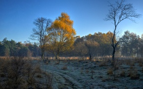 Picture frost, autumn, the sky, trees, morning