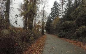 Picture road, foliage, Autumn, road, autumn, leaves, fall