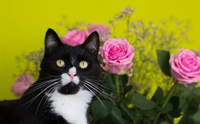 Picture cat, flowers, background, roses, bouquet