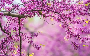 Picture branches, nature, tree, spring, nature, tree, spring, branches