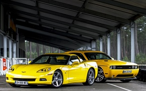 Picture trees, yellow, Corvette, Chevrolet, Dodge, canopy, SRT8, Challenger, Dodge, yellow, Chevrolet, shed