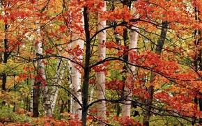 Picture autumn, tree