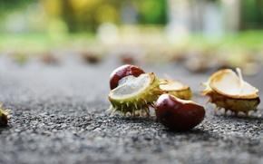 Picture autumn, the city, chestnut