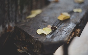 Picture leaves, macro, the inscription, foliage, November