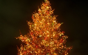 Picture night, lights, tree, new year