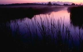 Wallpaper morning, grass, Swamp