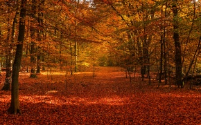 Picture autumn, forest, trees, foliage, the colors of autumn