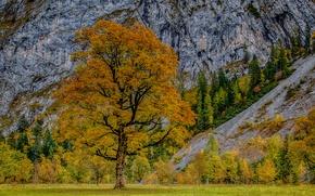 Picture autumn, trees, mountains