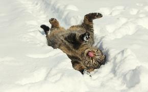 Picture winter, snow, mood, Kote