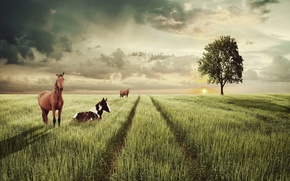 Picture track, horse, tree, field, clouds, the sun, the sky, grass, landscape