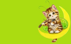 Picture mood, the moon, violin, art, kitty, children's, suit, Caemi Hara