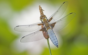 Picture macro, wings, dragonfly, insect