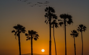 Picture sunset, birds, palm trees, California