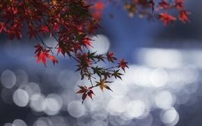 Picture autumn, leaves, water, reflection, branch, Blik, the crimson