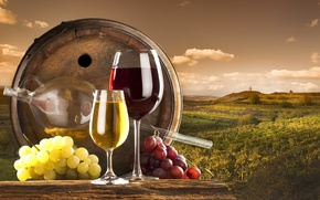 Picture clouds, wine, red, white, glasses, grapes, vineyard, barrel