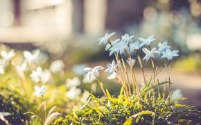 Wallpaper flowers, blur, bokeh, petals, glare, grass, Blue