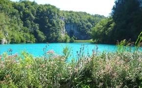 Wallpaper grass, Blue lake