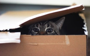 Picture eyes, cat, look, box
