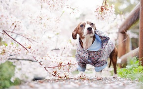 Picture dog, look, spring, each