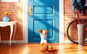 Picture bike, cartoon, dog, umbrella, the door, Mat, the ball, waiting, Terrier, Max, The secret life …
