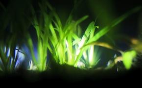 Picture light, aquarium, plants