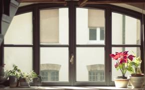 Picture glass, flowers, window, pots