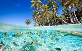 Picture Nature, Fish, Trees, Tropics, Palm trees, Coast