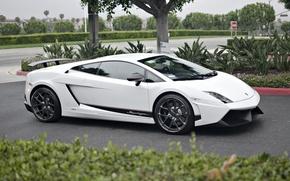 Picture white, grass, trees, street, Lamborghini, white, grass, gallardo, Superleggera, tree, street, Lamborghini, LP560-4
