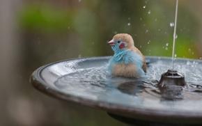 Picture bird, splashing, fountain