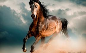 Picture horse, desert, Horse, Mustang, gallop, horse