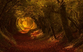 Wallpaper road, autumn, light, trees, nature, trail