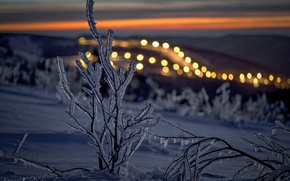 Wallpaper winter, snow, ice, branch, the evening, light.bokeh