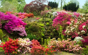 Picture flowers, garden, trees, the bushes, moss, Azalea, UK, Bodnant Gardens Wales, stones
