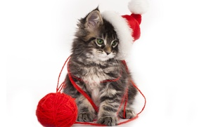 Picture tangle, Kitty, Cat, Hat, New year, Animals, cap