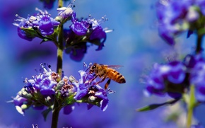 Picture macro, flowers, bee, plant, insect