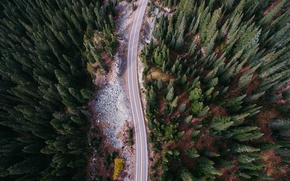 Picture forest, nature, stones, the view from the top, trees.road