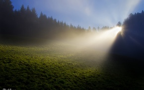 Picture forest, grass, rays, light, nature, fog, Rosa, glade, France, morning, Stephan & photography by Anna