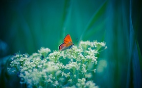 Picture flowers, background, butterfly, plant, orange, white