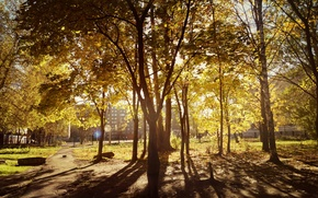 Picture autumn, forest, leaves, the sun, rays, light, trees, time, the city, tree, yard, weather, yellow, …