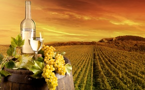 Wallpaper landscape, grapes, vineyard, field, leaves, wine, glass, barrel, bottle, plantation