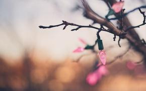 Wallpaper background, branch, garland
