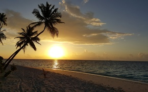 Picture beach, the sky, the sun, sunset, tropics, palm trees, the ocean, island, beauty, white sand, …