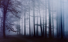 Picture forest, fog, morning, track