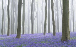 Picture trees, flowers, fog