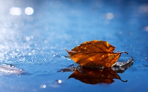 Picture water, yellow, sheet, droplets, glare, leaf, Autumn, blur, puddle, fallen, autumn