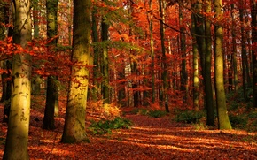 Wallpaper autumn, forest, trees, nature