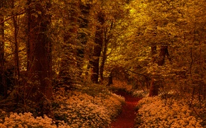 Picture forest, trees, flowers, path